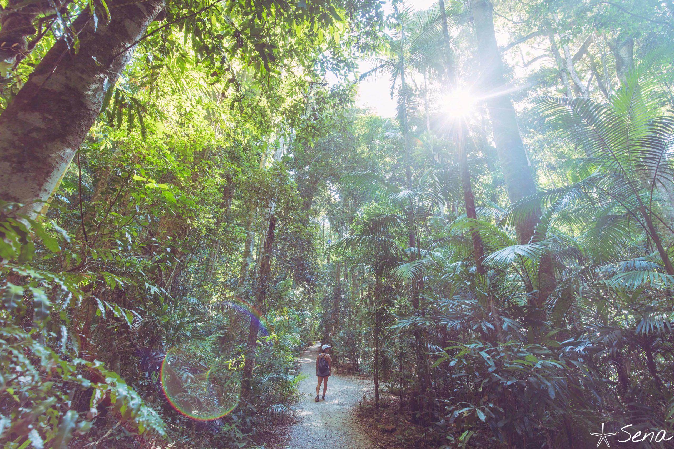 オーストラリア メアリーケインクロス 熱帯雨林
